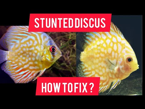HOW TO : FIX STUNTED DISCUS !?