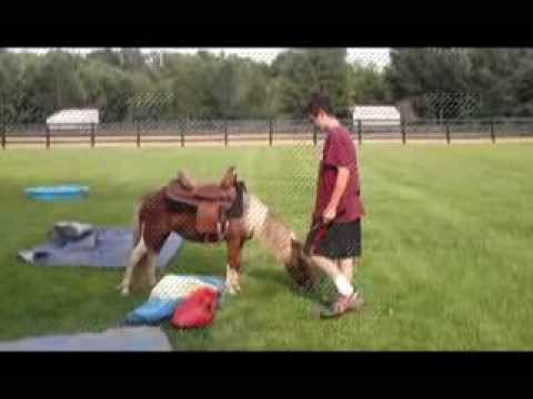 Mini horse ride doovi for Negative show pool horse racing