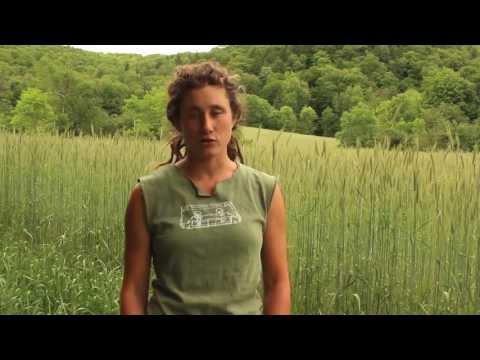 Cayuga Pure Organics IndieGoGo film