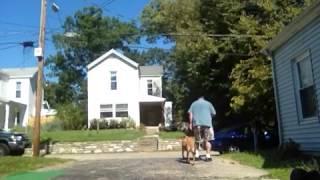 Mixed Breed - Cincinnati Obedience Training - Fearful Dog
