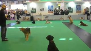 Barney With The Good Boy Dog School Performs At Crufts!