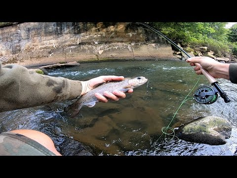 Catching Tons Of Late Summer Trout On A Fly Rod 2019 - Fly Fishing Pennsylvania