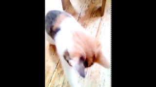 Игра с листиком. Котёнок Эля умеет мыслить.