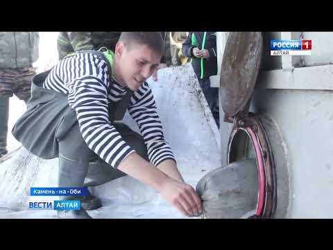 В Обь выпустили две тонны молодых сазанов