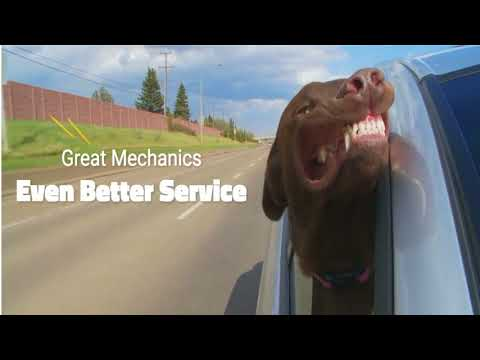 VIP DOG in CAR Promo with Watermark