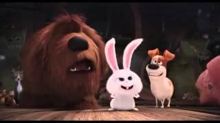Мультфильм Тайная жизнь домашних животных (2016) в HD смотреть трейлер