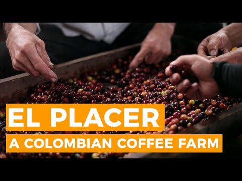 Coffee Production at a Farm in Colombia