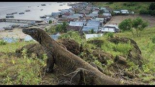 9個罕見滅絕又突然出現的生物