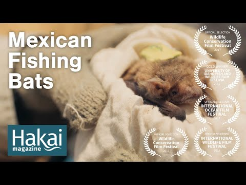 Mexican Fishing Bats