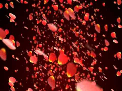 Rose Petals Falling Wallpaper Transparent Gif Falling Rose Petals Happyv Swf Youtube
