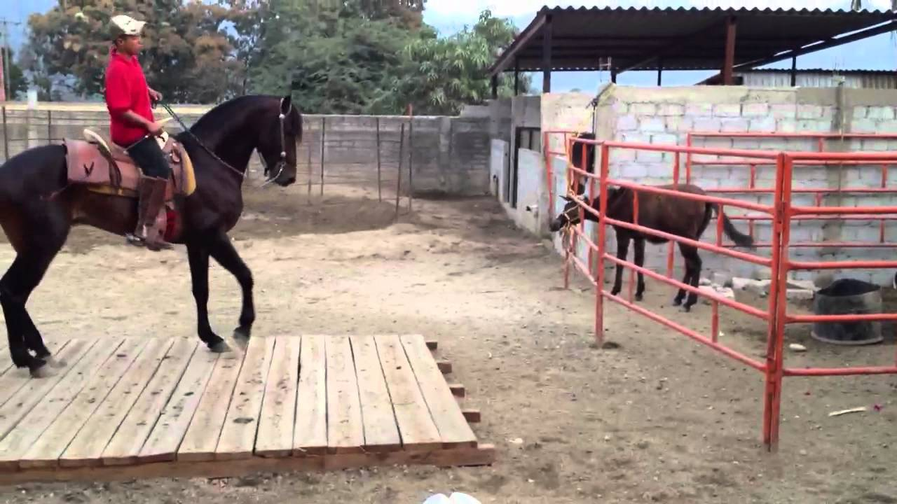 how to train a skittish horse
