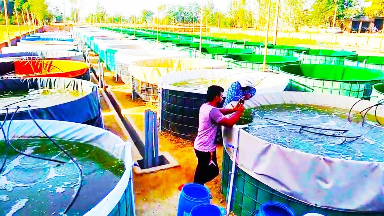 Biofloc fish farming in Haryana ( India's biggest biofloc)
