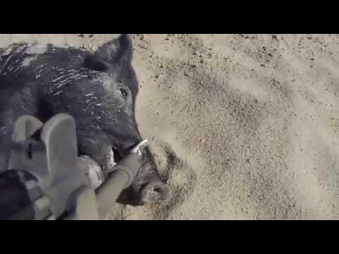 Hog Shooting Australia