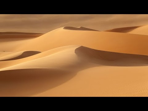 العالم يحتفي باليوم العالمي لمكافحة التصحر والجفاف  - نشر قبل 5 ساعة