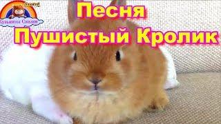 Детская Песня Пушистый Кролик-Мультик-Сказка=Детям от 1 года