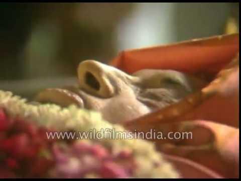 indira-gandhi's-final-journey