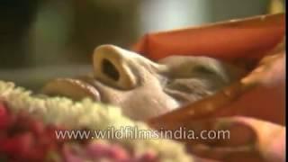 Indira Gandhi's final journey