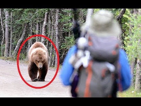 11 FEISTIEST Bears Ever