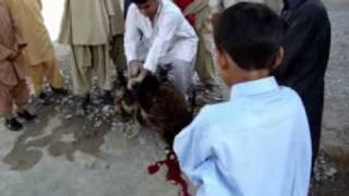 Balochi Song Inayat gul Kharani.mpg majeed mazarzai
