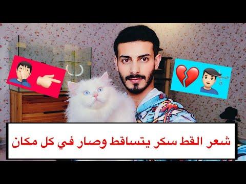 القط سكر تعبني بشعرة الطويل والتساقط 😫💔 / Mohamed Vlog