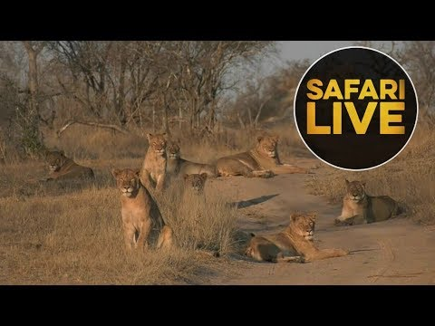 safariLIVE - Sunrise Safari - August 20, 2018