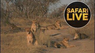 safariLIVE - Sunrise Safari - August 20, 2018