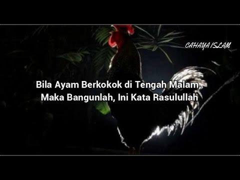 Masyaallah!!!Bila Ayam Berkokok di Tengah Maalam, Maka Banguunlah, Ini Kata Rasulullah