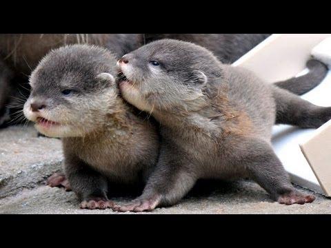 Cute Otter Wallpaper Cute Baby Otter Scream Youtube
