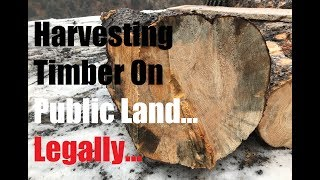 #279 - Almost Free Logs, Timber, Lumber On National Forest (Public Land)