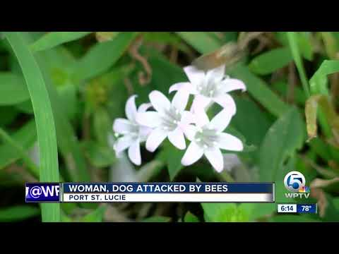 Woman, 4 Dogs Killed In Pursuit Crash from YouTube · Duration:  2 minutes 6 seconds