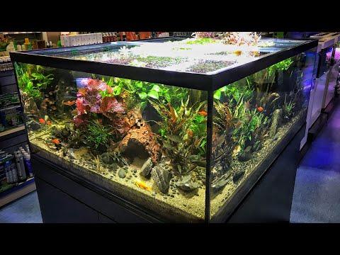 Epic Aquarium Fish And Aquascaping Store - Aquajardin