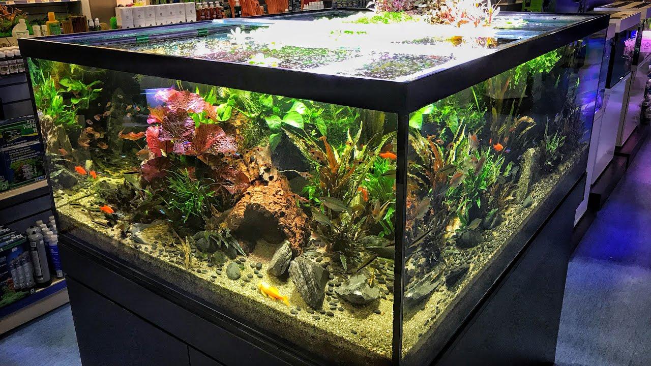 Epic Aquarium Fish And Aquascaping Store Aquajardin Youtube