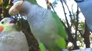 Funny video for animals lovers