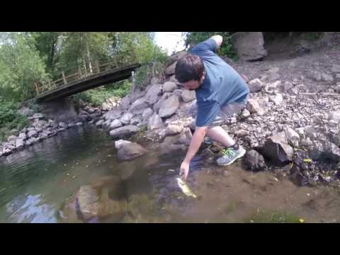 Fishin the willamette river for smallmouth bass