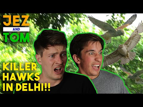 Attacked By Hawks In Delhi | Foreigners In India | Jez & Tom Travel Vlog
