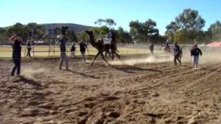 Alice Springs Dromedary Race.MPG