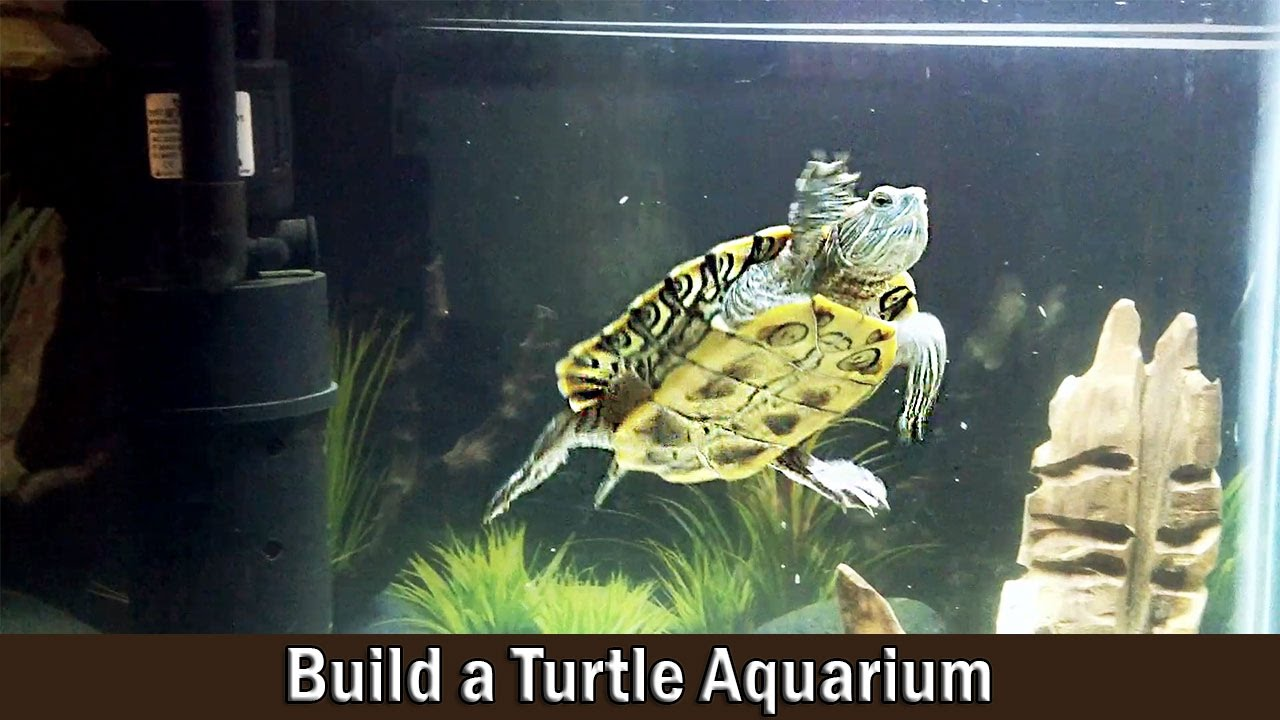 Turtle Aquarium Building And Setting Up Guide Diy Youtube