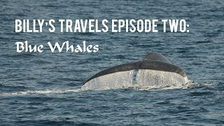 Billy's Travels Episode Two: Blue Whales