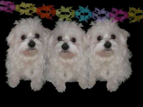 verjaardagsliedjes honden