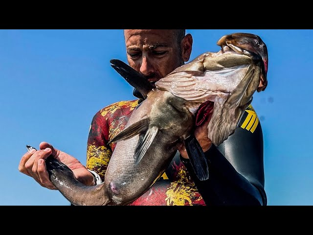 A Great Fish From The Deep Blue Sea |Spearfishing Life 🇬🇷