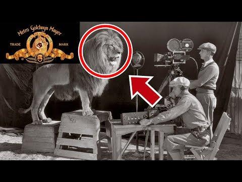 La verdadera historia del León de la intro de MGM ¿Cómo se hizo?