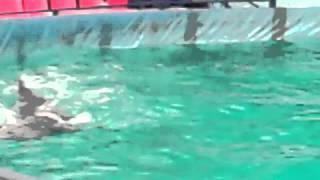 Про дельфины