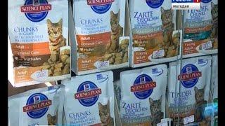 В год около 50 ти владельцев кошек и собак обращаются в ветклиники Магадана с симптомами отравления