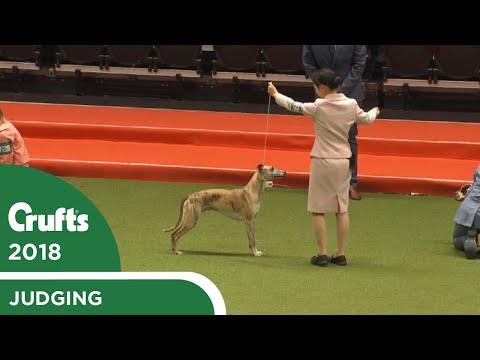 International Junior Handling Competition (Second Round) Part 1   Crufts 2018