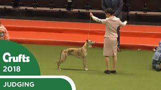 international-junior-handling-competition-second-round-part-1-crufts-2018