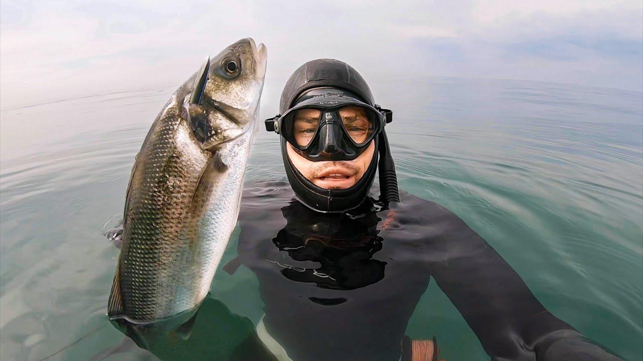 UK Bass spearfishing UK & how to get perfect crispy skin fish!