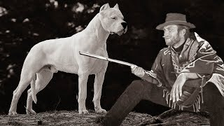 These Are 10 Dogs That No Longer Exist