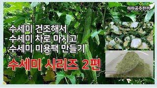 식물 #수세미로 비염에 좋은 #수세미차 보습효과 탁월한…