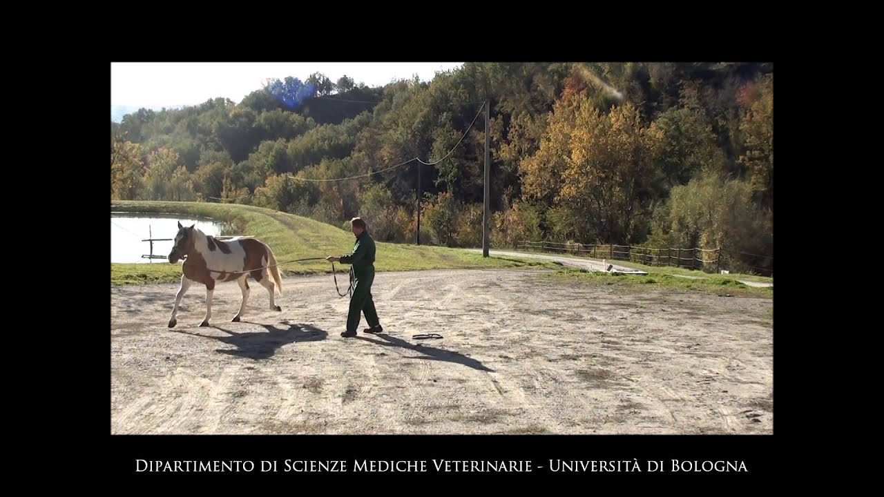 corsa di cavalli btc btc usd bittrex tradingview