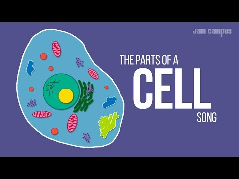THE PARTS OF A CELL SONG | Science Music Video